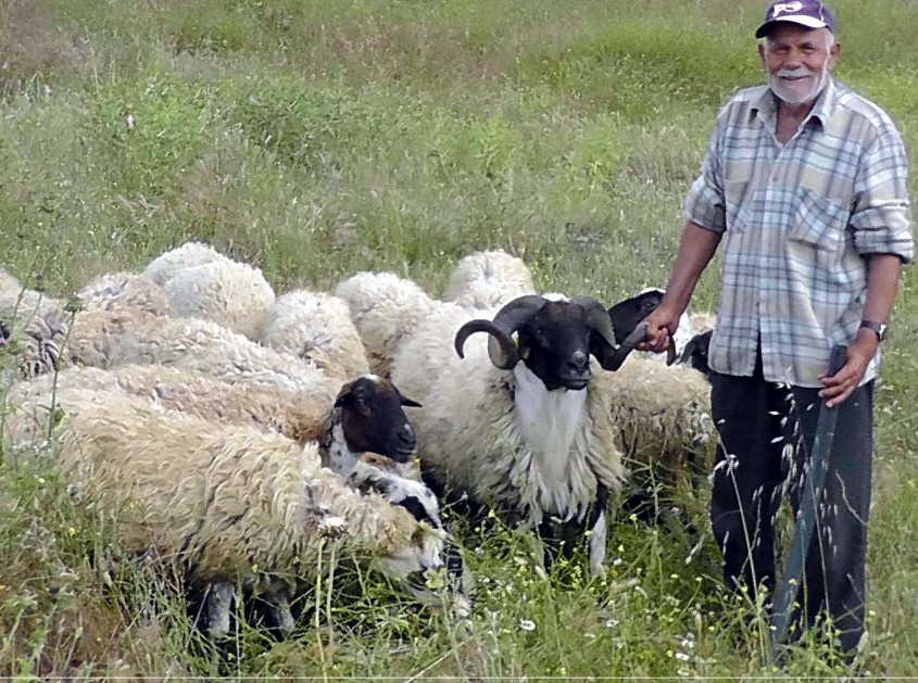 """""""Bu Devirde Çoban Bulmak Çok Zor"""""""