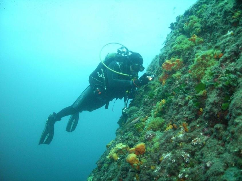 Deniz Altının Gizemli Dünyası