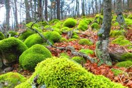Kazdağları'nın Endemik Bitkileri